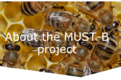 EFSA crea sitio web orientado a la investigación de la salud de las abejas