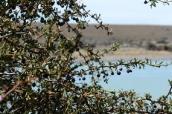 frutos silvestres de Aysén dan vida a jugos 100% antioxidantes